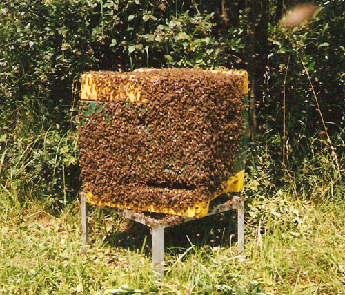 Bienenstock im August 2004